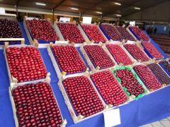 La ciliegia di Castegnero