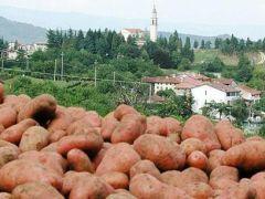 """Patata Monte Faldo rischi per la siccità """"Raccolto precoce"""""""