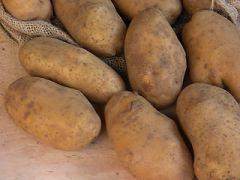 La patata di Rotzo